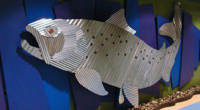 Bow River Fish
